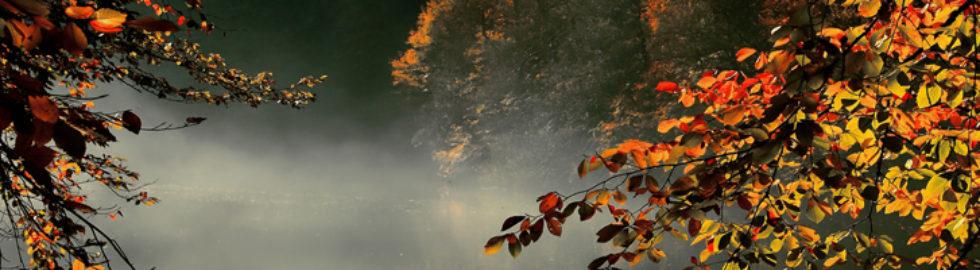 Doğa-fotoğrafı3