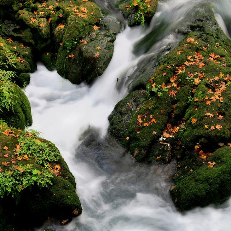 Doğa-fotoğrafı5