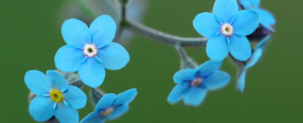 Makro Fotoğraflar Nasıl Çekilir, Makro Çekim Teknikleri Makro objektiflerimizi takıp, sabır ve teknik birikimimizi kuşanarak doğanın detaylarını ziyaret edebilirsiniz… Baharın gelmesiyle birlikte, birbiri ardına açan çiçekler, uçuşmaya başlayan kelebekler, toprak altındaki böceklerden, ağaç kovuklarında yaşayan sincaplara kadar birçok canlı adeta yeniden doğar. Bu zamanlar, fotoğrafçıların sabırsızlıkla beklediği, yaman kış aylarından […]