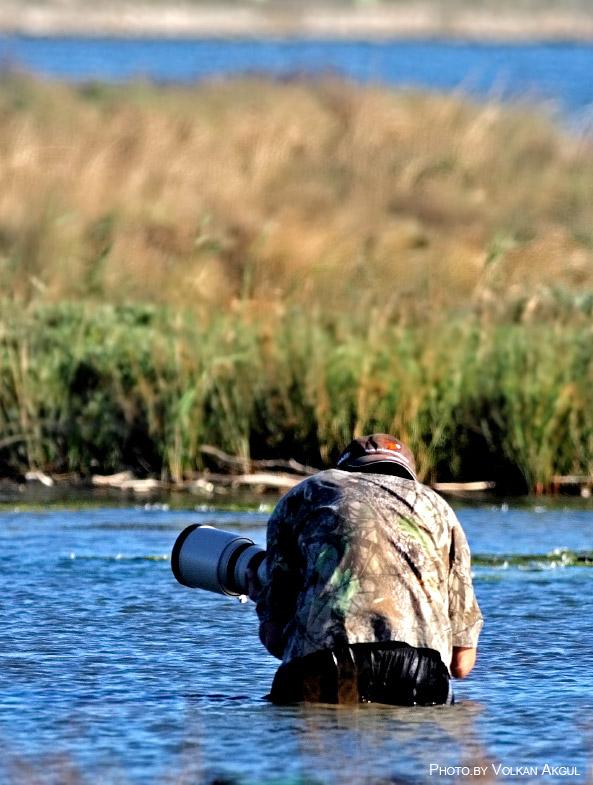 Kuş Fotoğrafçılığı