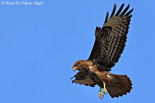 kuş fotoğrafı