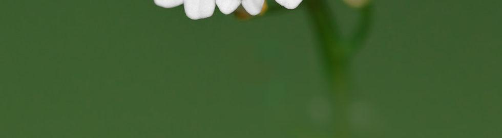 çiçek-fotoğrafları-çekim-teknikleri