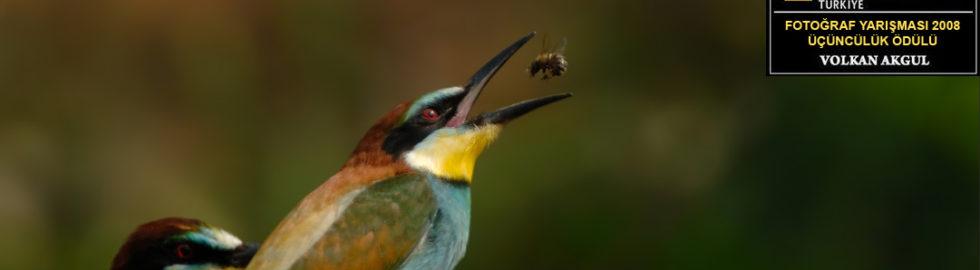 National-Geographic-Fotoğraf-Yarışması-Volkan-Akgül2