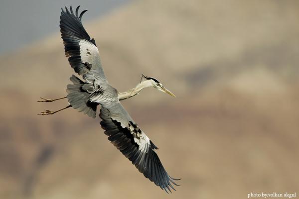 kuş fotoğrafçısı