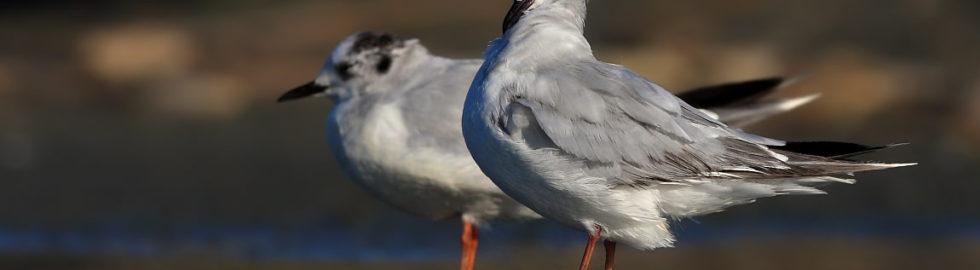 kuş-fotoğrafçısı,-kuş-fotoğrafı-nasıl-çekilir,-kuş-fotoğrafları,-su-kuşları2_mini
