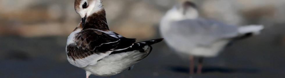 kuş-fotoğrafçısı,-kuş-fotoğrafı-nasıl-çekilir,-kuş-fotoğrafları,estetik-kuş-fotoğrafları_mini