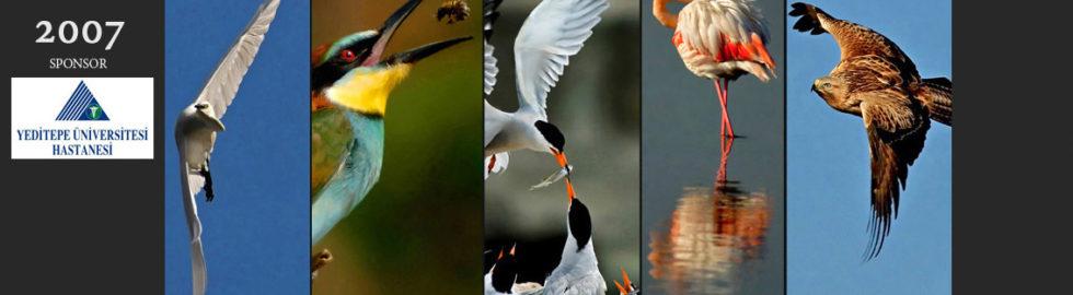 kuş fotoğrafçısı, volkan akgül, fotoğraf sergisi