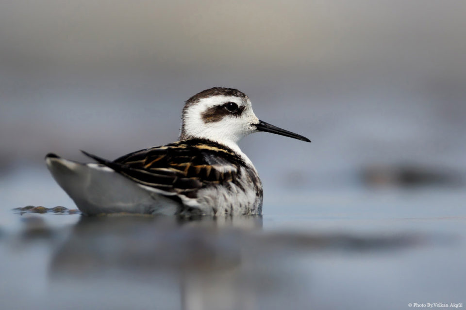 kuş-fotoğrafı,-kuş-fotoğrafları-nasıl-çekilir,-su-kuşları_mini