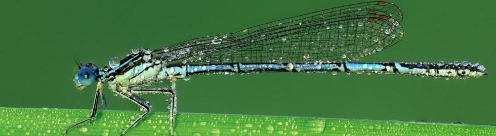 makro-fotoğraf-çekim-teknikleri,-yusufcuk-böceği