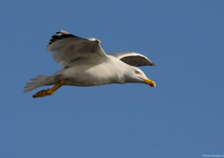 martı-kuş-fotoğraf-çekimi