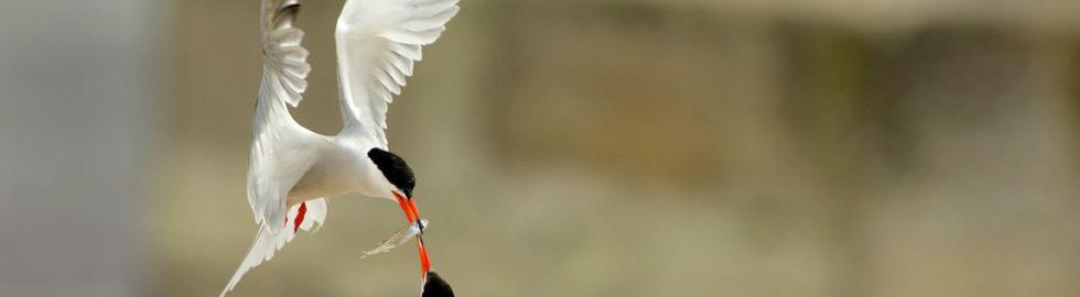 national-geographic-fotoğraf-yarışması,-ödüllü-fotoğraflar,-sumru-kuşları,-fotoğraf-çekim-teknikleri_mini