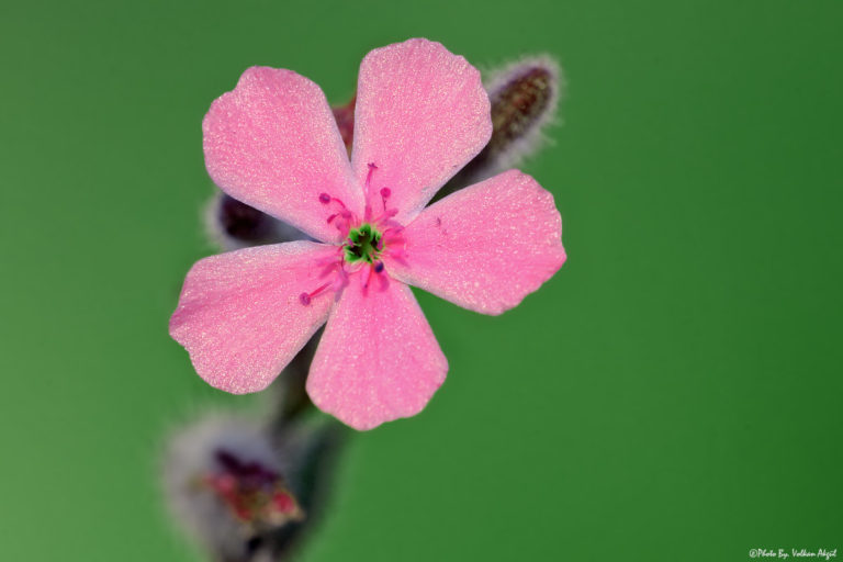 çiçek-fotoğrafı-çekim-tekniği2-fotoğrafçılık