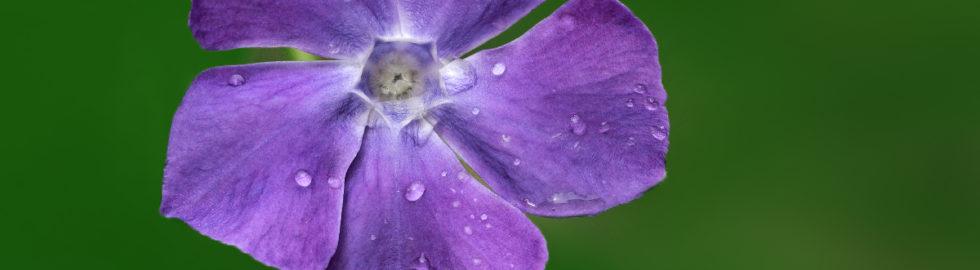 çiçek-fotoğrafı,-çiçek-fotoğrafı-çekim-teknikleri-çiçek-fotoğrafları-akgül