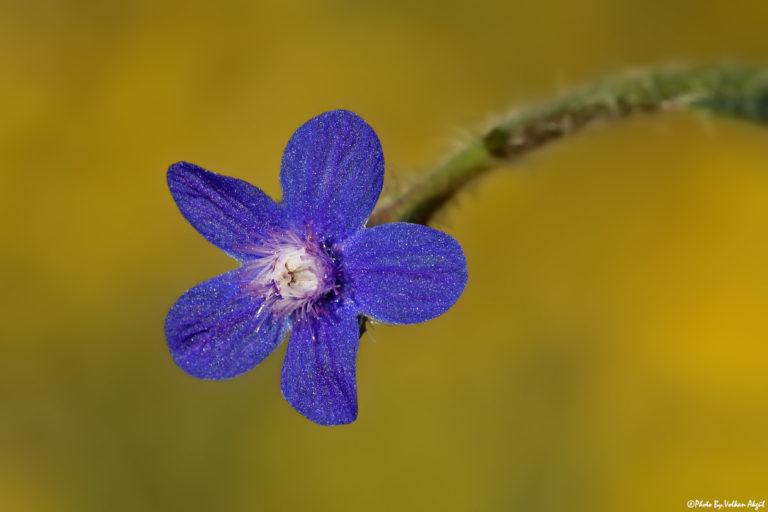 çiçek-fotoğrafı,-çiçek-fotoğraf-çekimi,-çiçek-fotoğrafları