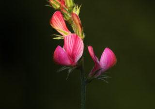 çiçek-fotoğrafı,-çiçek-resimleri,-çiçek-fotoğrafı