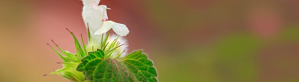 çiçek-fotoğrafı,-makro-çekim-teknikleri,-çiçek-fotoğrafları,-makro-çekimler,-volkan-akgül