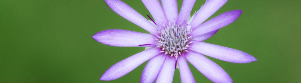 çiçek-fotoğraf-çekimleri,-çiçek-fotoğrafı-çekim-teknikleri