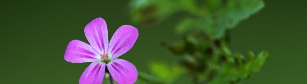 çiçek-fotoğrafi,-makro-fotoğraf-çekim-teknikleri