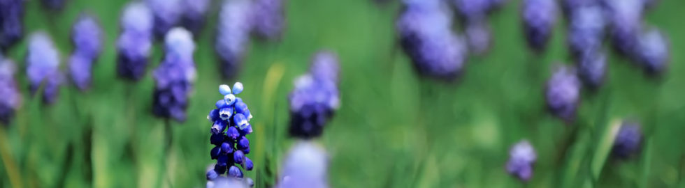 çiçek-manzara-fotoğrafları-volkan-akgül