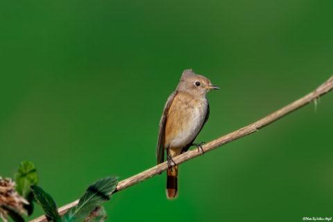 kuş-fotoğrafçılığı,-kuş-fotoğrafı-kuş-fotoğrafı-çekim-teknikleri