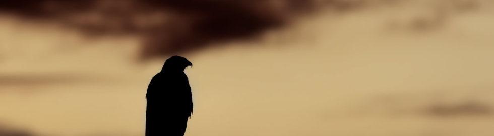 kuş-fotoğrafı-çekim-teknikleri,-kuş-resimleri,-şahin
