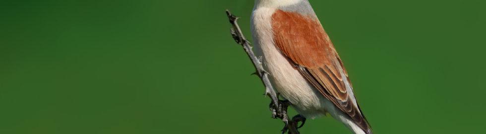 kuş-fotoğrafi-çekim-teknikleri,-kuş-fotoğrafı-örümcek-kuşu