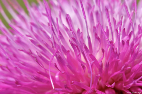 pembe-çiçek-fotoğrafı,-pembe-düşler