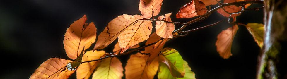 Fotoğrafta Işık, Sonbahar Yaprakları, Sonbahar
