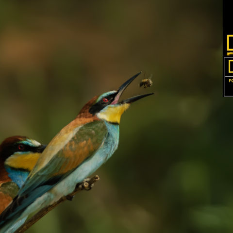 National-Geographic-fotoğraf-yarışması-ödül
