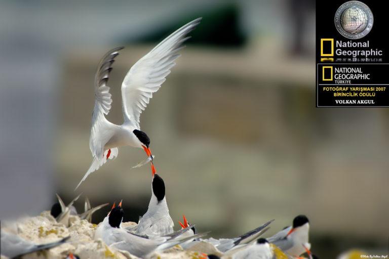 National-Geographic-fotoğraf-yarışması