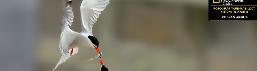 birds photo-14