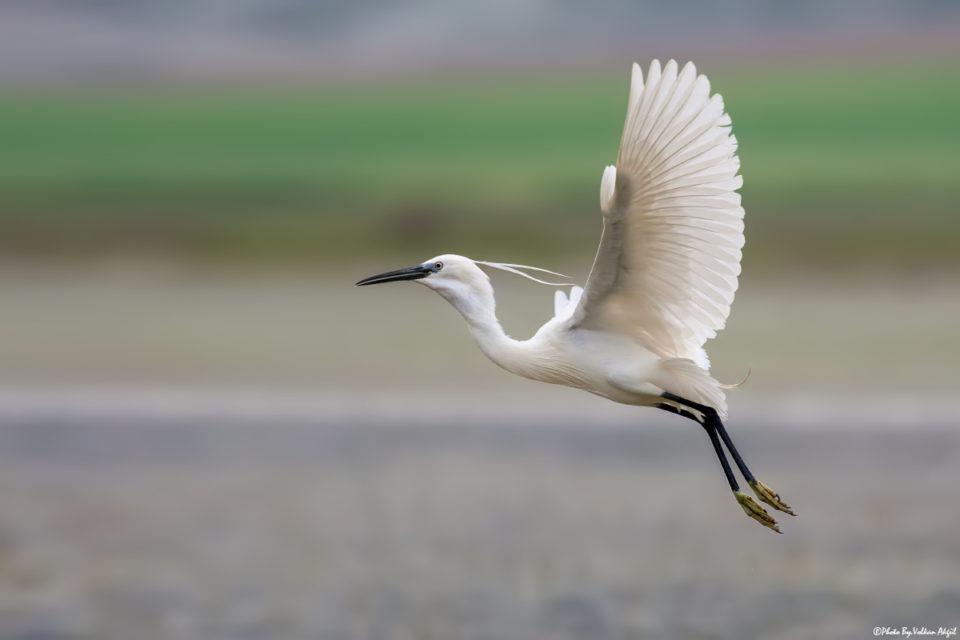 bird-photography-flying-bird-birds-photo-kuş-fotoğrafı-çekim-teknikleri