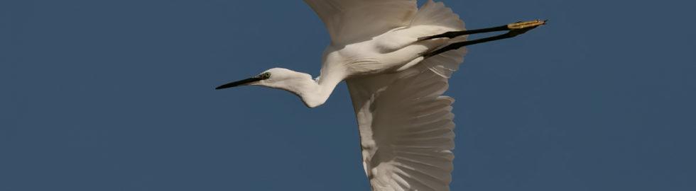 bird photography flying bird kuş fotoğrafçılığı