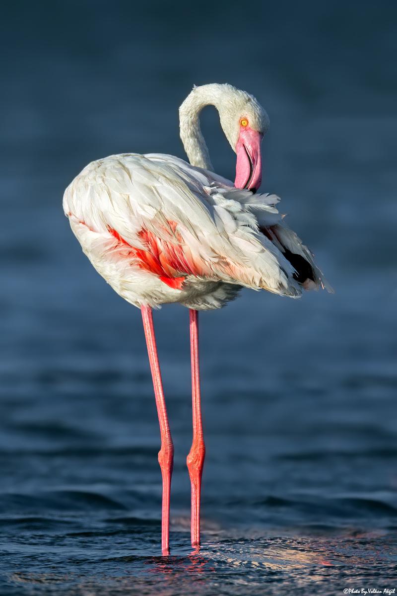 flamingo-fotoğrafı-bird-photo-bird-photographers