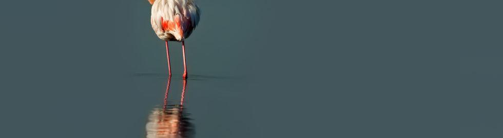 flamingolar-flamingo-fotoğrafı-flamingo-çekimi-flamingo-fotoğraf-çek