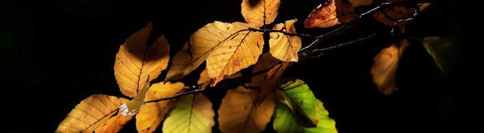 sonhabar-yaprakları-çiçek-fotoğrafı-çekim-teknikleri,-sonbahar-çekimi