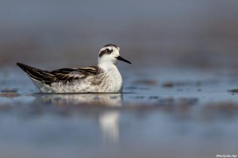 su-kuşları,-su-kuşu,-kuş-fotoğrafı,-kuş-çekimleri,-kuş-fotoğrafı-çekim-teknikleri,volkan-akgül