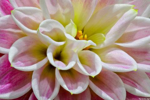çiçek-çiçek-fotoğrafı-makro-çekim-teknikleri-flower-photography