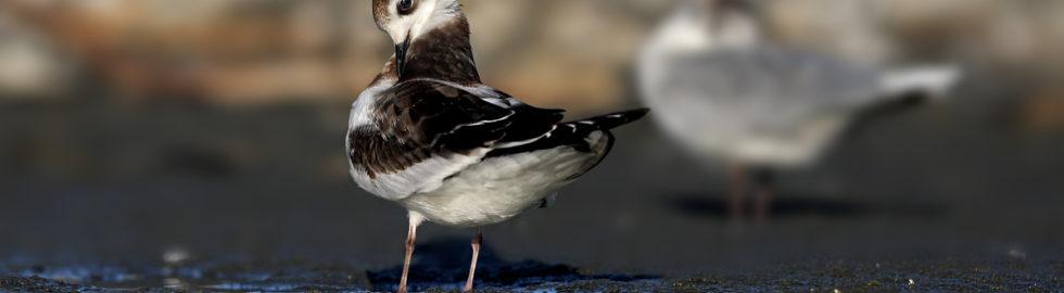 bird-photographer-kuş-fotoğrafçısı-kuş-fotoğrafı