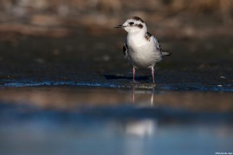 bird-photography-kuş-fotoğrafçısı-kuş-fotoğrafı-kuş-fotoğrafı-çekim-teknikleri