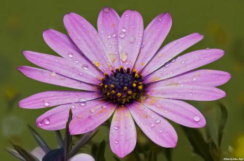 flora-photography-pink-photos-pembe-çiçek-pink-flower