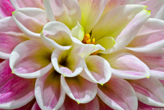flower-photography-flowers-çiçek-fotoğrafçılığı-çiçek-fotoğrafları-çiçek-resimleri