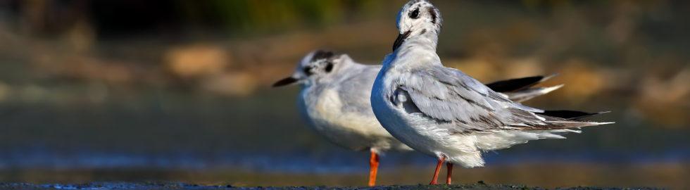 kuş-fotoğrafçısı,-kuş-fotoğrafçılığı,-kuş-fotoğrafı