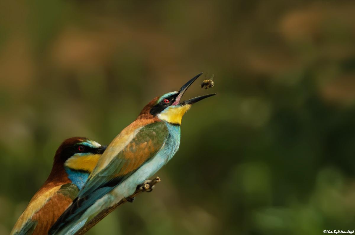 ödüllü-fotoğraflar,-ödüllü-fotoğraf,-doğa-fotoğrafçısı,kuş-fotoğrafçısı
