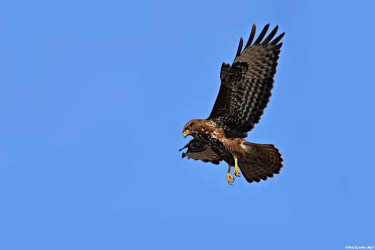 bird-photographer-bird-photos-kuş-fotoğrafçılığı-