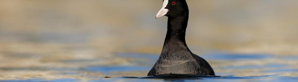 sakarmeke-kuş-fotoğrafçısı-kuş-fotoğraf-çekimi