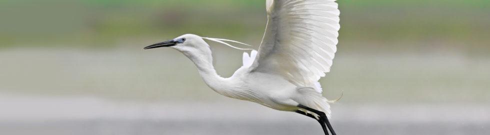 kuş-fotoğrafçısı