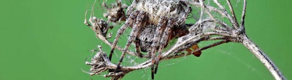 örümcek-fotoğrafı-örümcek-fotoğraf-çekimi