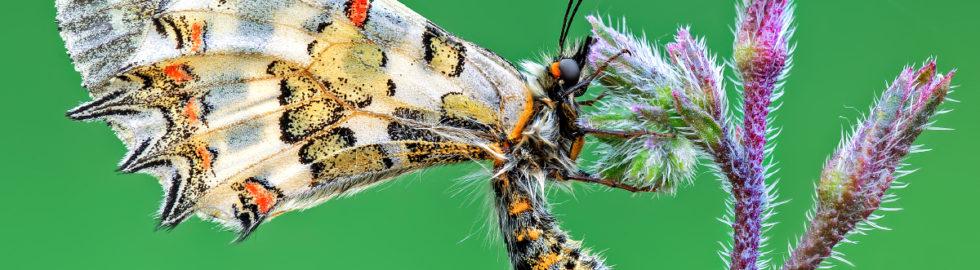 kelebek-çekimi-kelebek-fotoğraf-çekimi-makro-çekim-teknikleri2