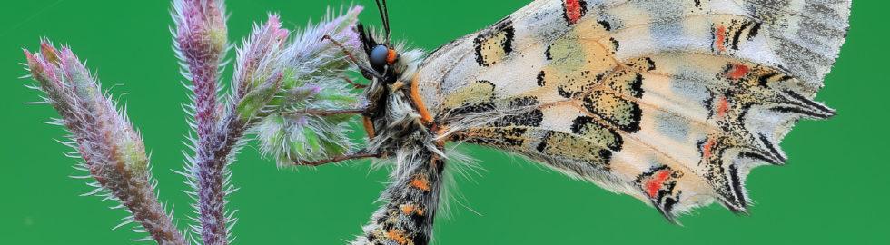 kelebek-fotoğraf-çekimi-kelebek-makro-çekim
